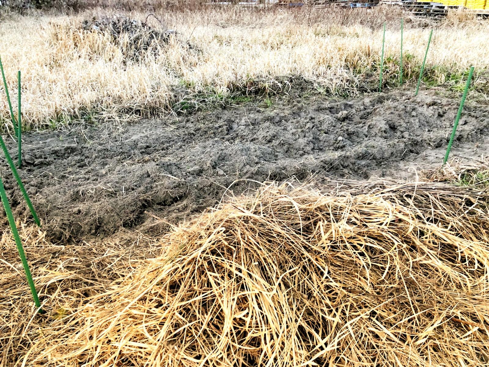 作りかけの畝の様子