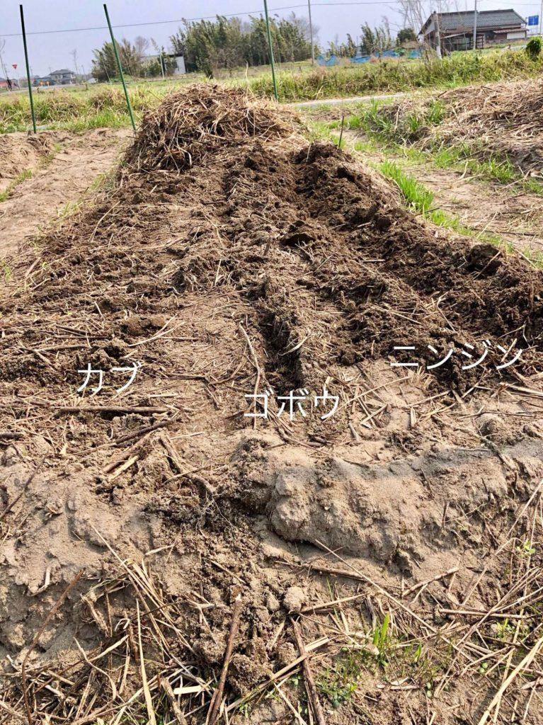 左から小カブ、ゴボウ、ニンジンを育てる畝