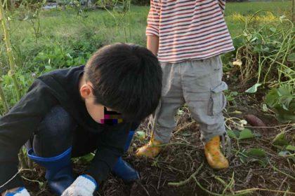 芋掘りする子どもたち