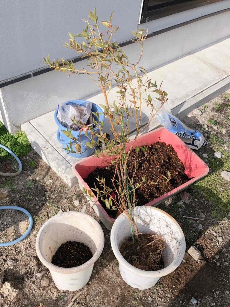 土を鉢にいれていきます。
