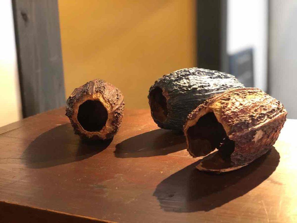 カカオの殻
